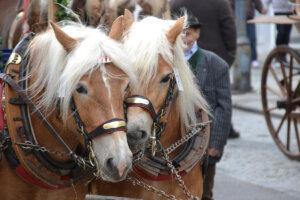 pferde an einer pferdekutsche
