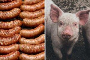 Collage Würste und Schwein