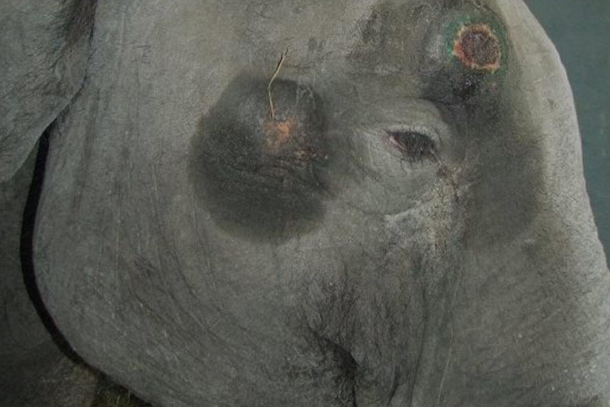 Zirkus Universal Renz – Chronik der Tierschutzverstöße und weitere Vorfälle