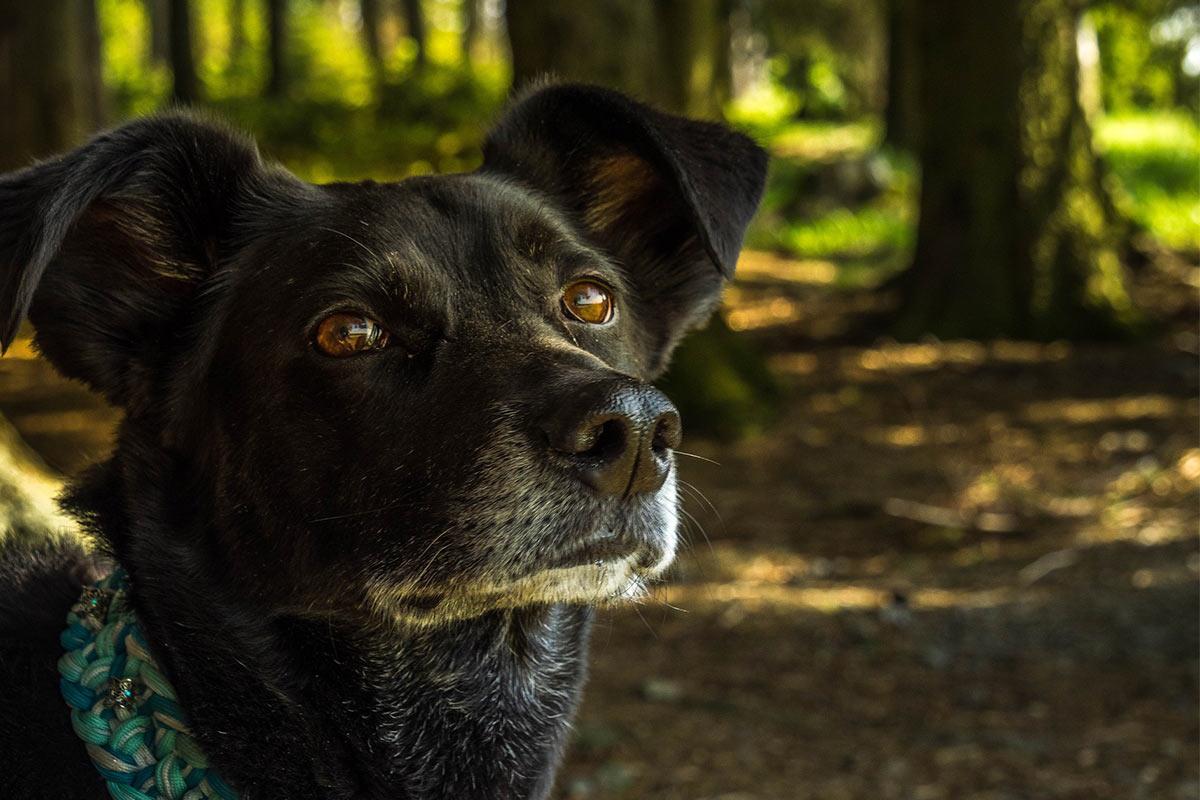 Elektrohalsband und Sprühhalsband – Tierquälerei beim Hund