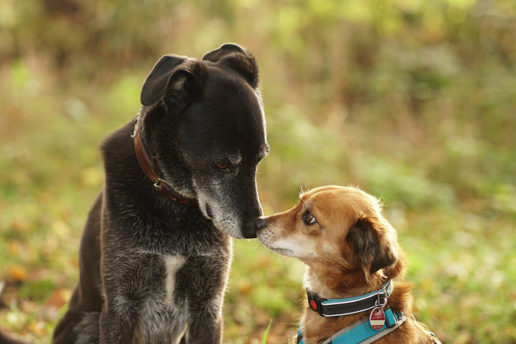 zwei verängstigte, schüchterne Hunde