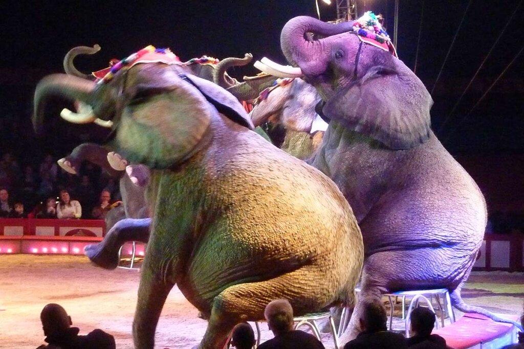 Elefanten sitzen auf Hockern in der Zirkusmanege