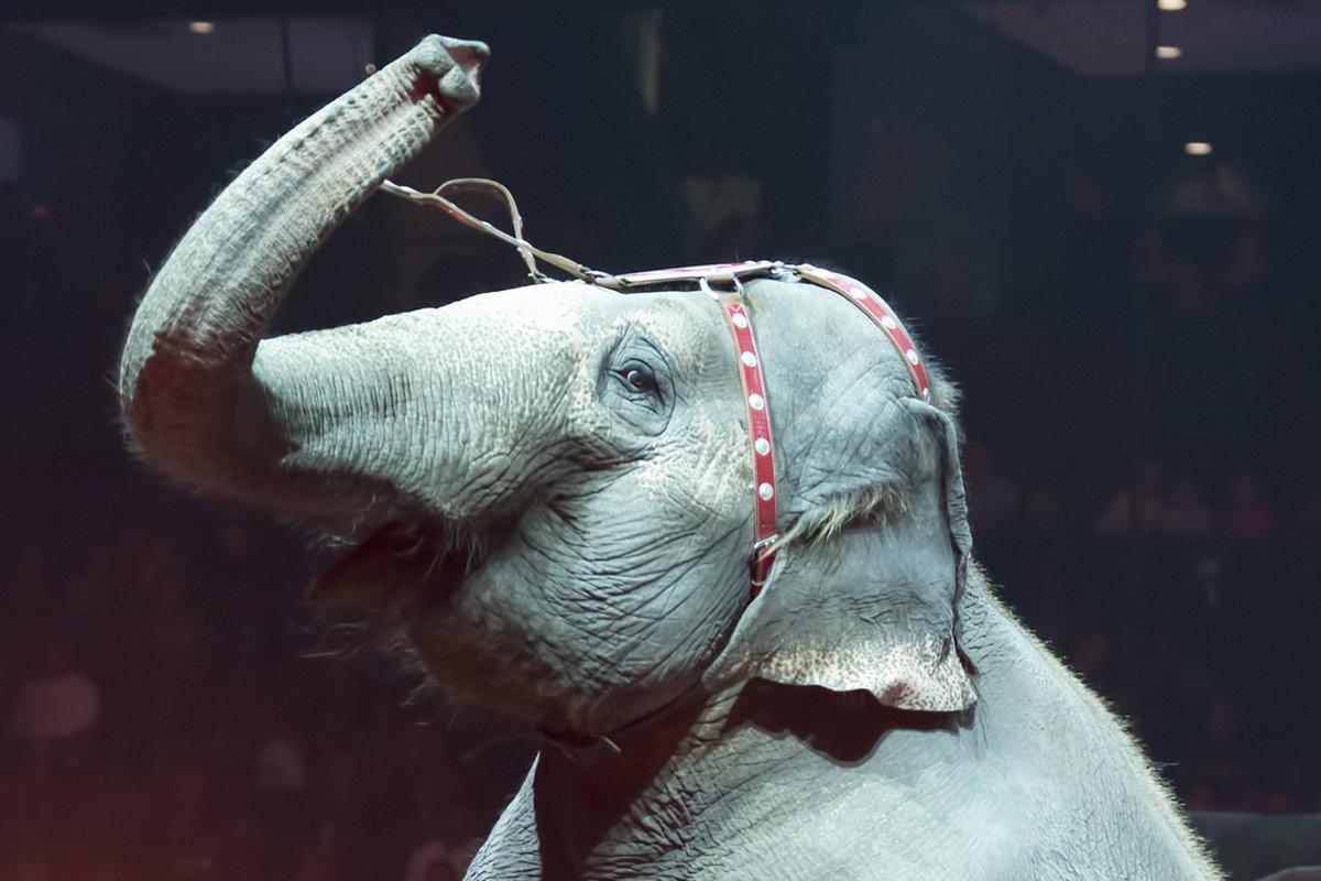 Die Dressur von Wildtieren – das grausamste Training der Welt