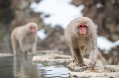 makake am wasser