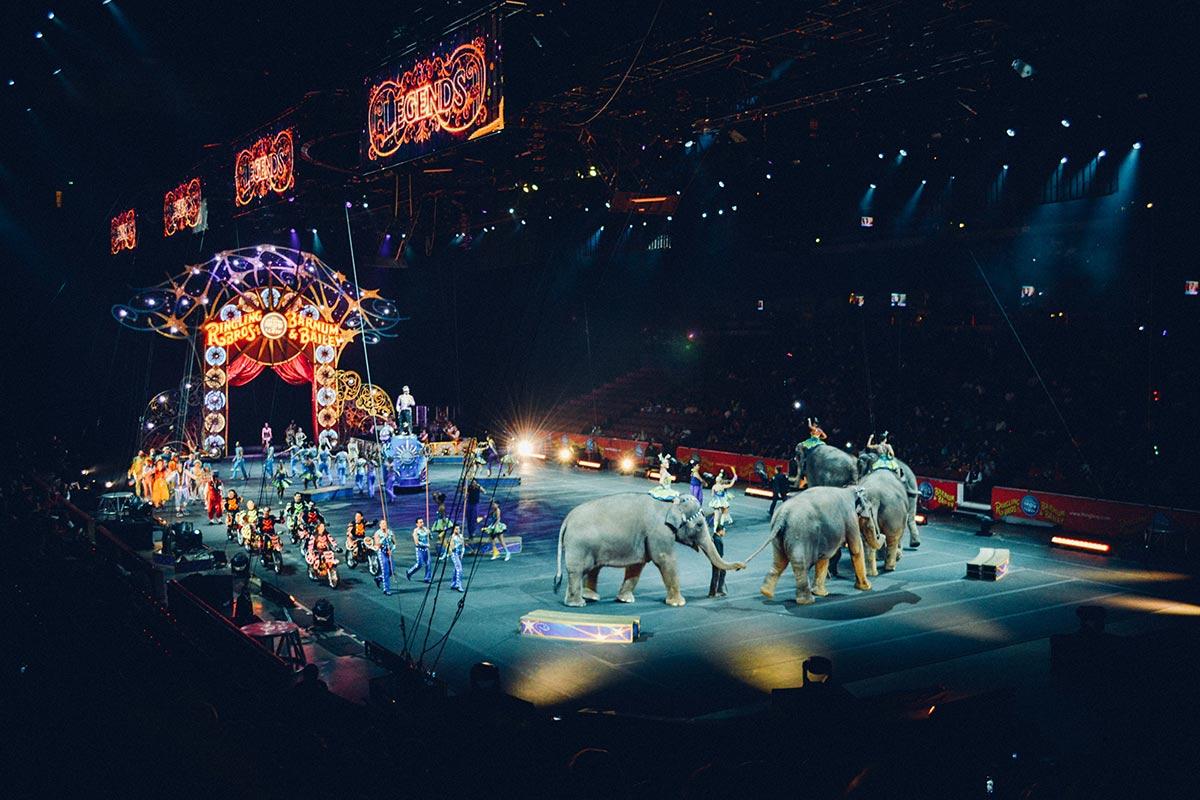 3 Gründe, warum Kinder nicht in Tier-Zirkusse gehen sollten