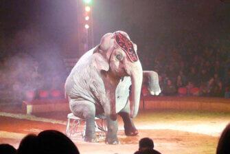 Circus Carl Busch - Chronik