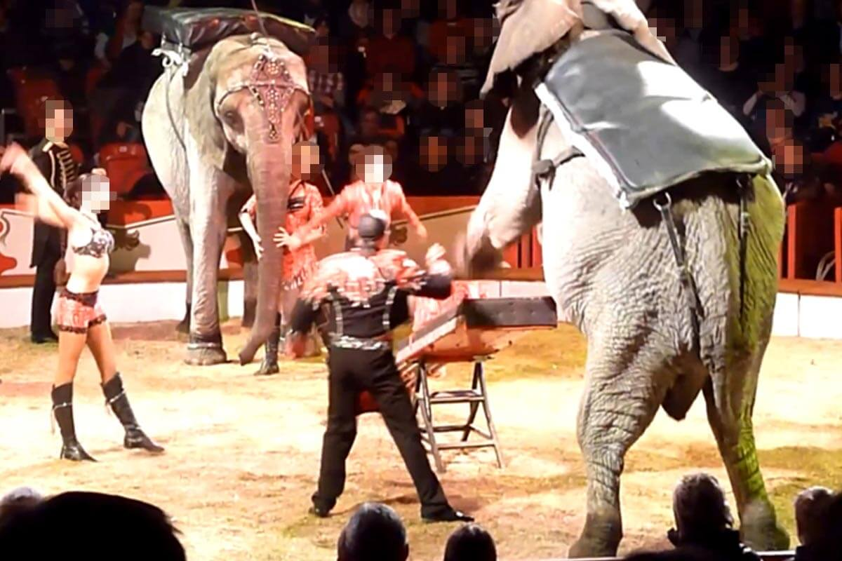 Zirkus Casselly: Elefanten-Quälerei in der Manege