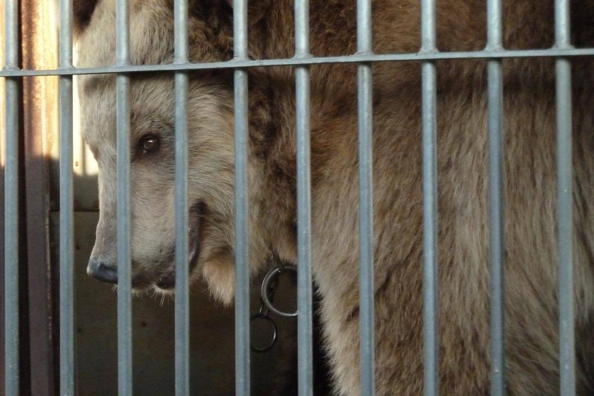 Circus Luna: Tierleid geht im neuen Circus Hallygally weiter