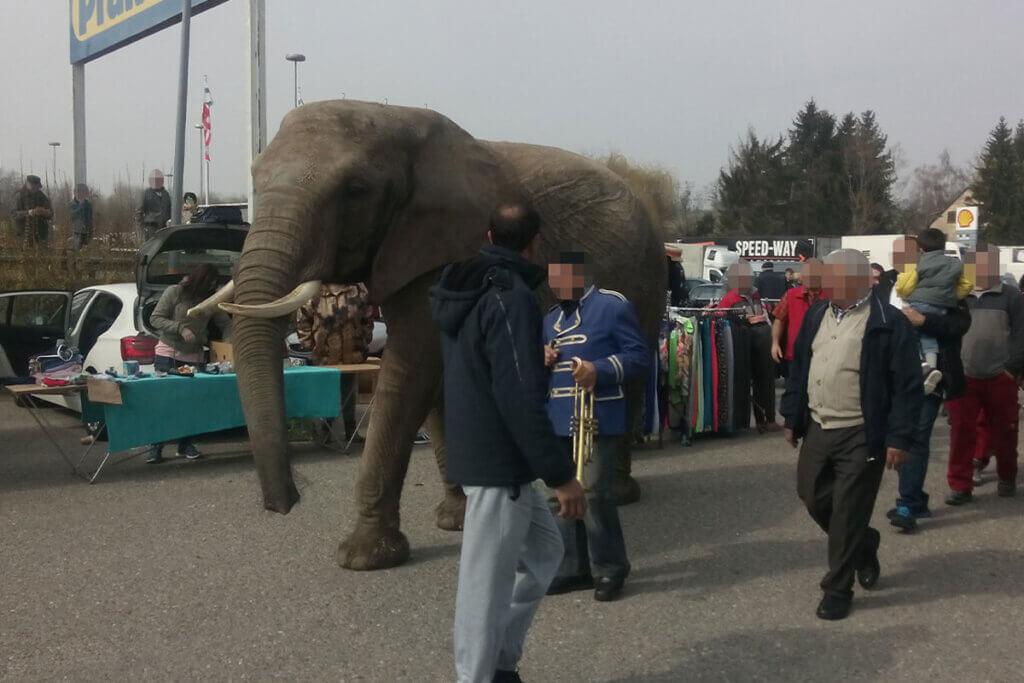 Elefant laeuft mit Zirkusdirektor ueber Flohmarkt