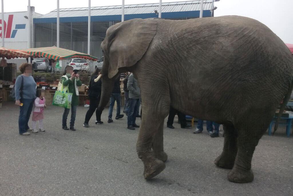 Elefant steht vor Menschen auf einem Parkplatz
