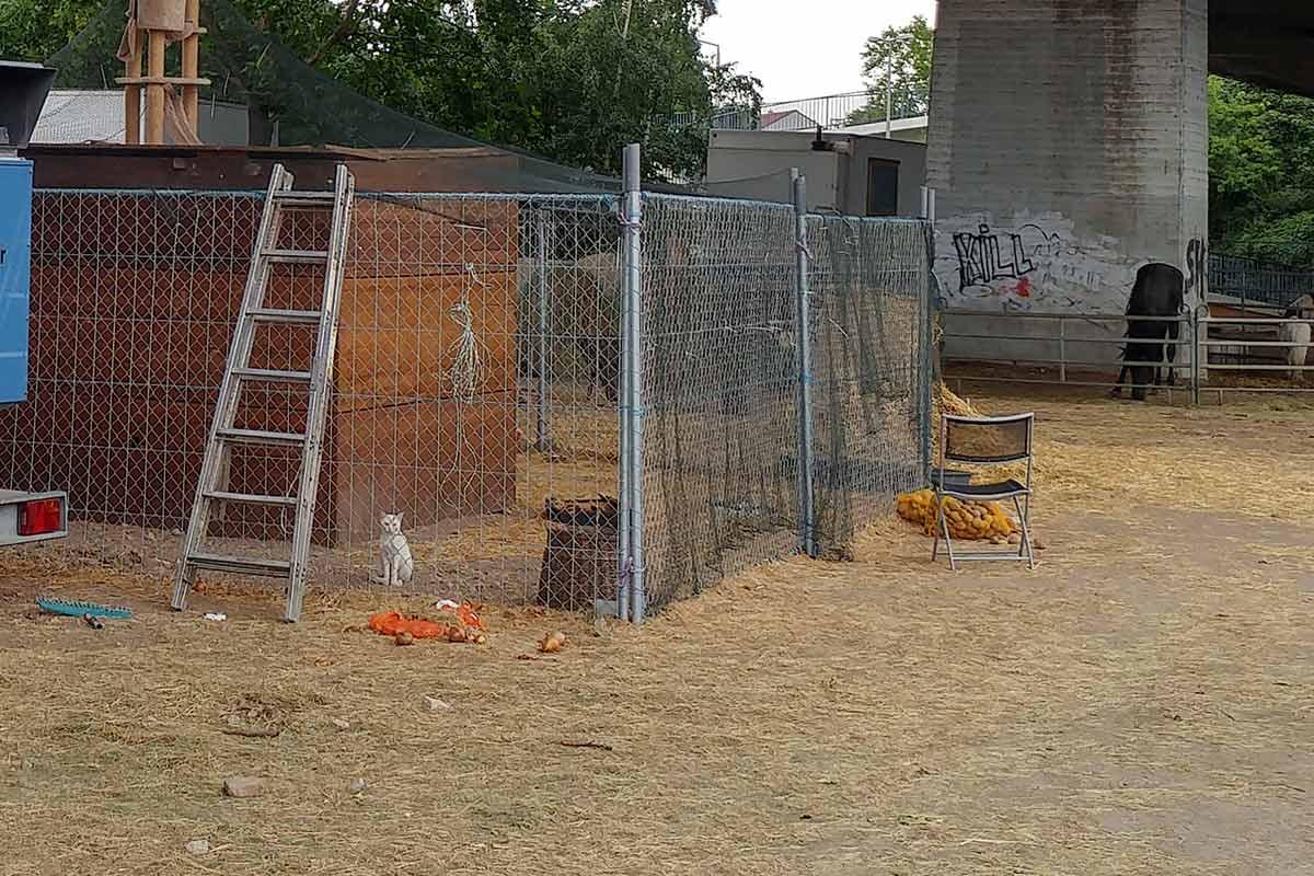 Eine Katze sitzt in einem abgesperrten Bereich bei Circus Luna