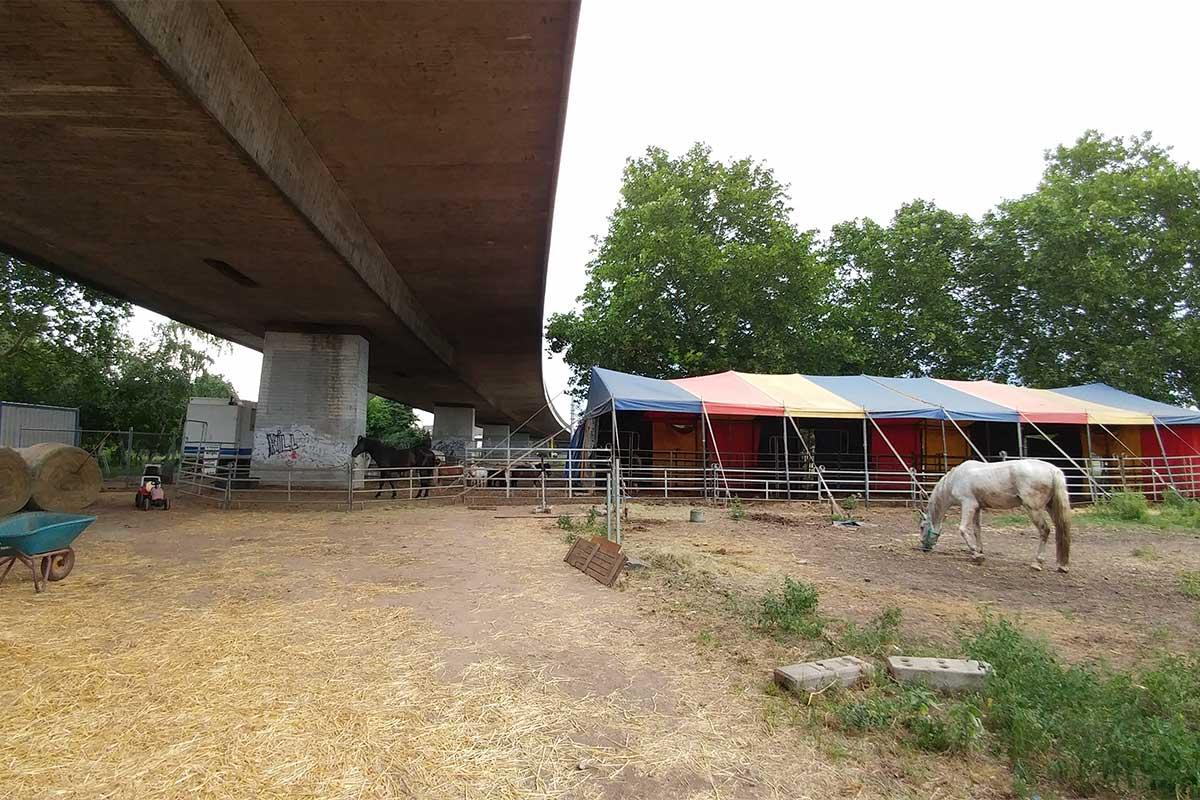 Unterbringung von Pferden bei Circus Luna