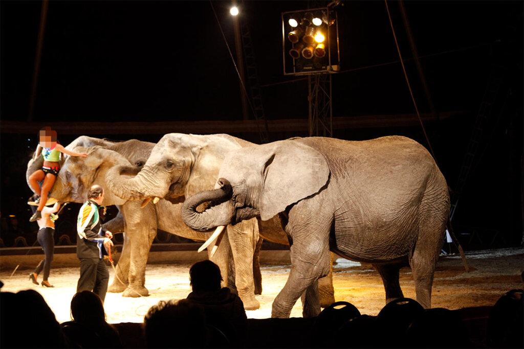 Elefanten in der Zirkus Manege
