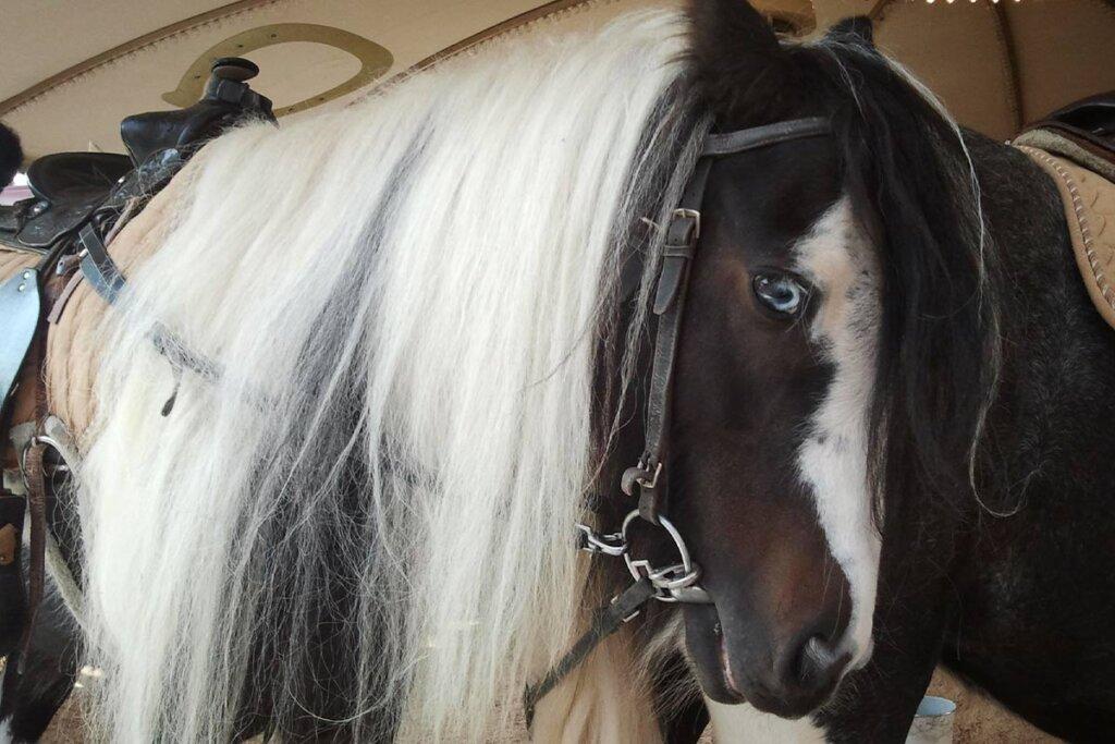 Pferd in einem Ponykarussell