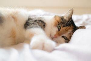 Katze liegt im Bett