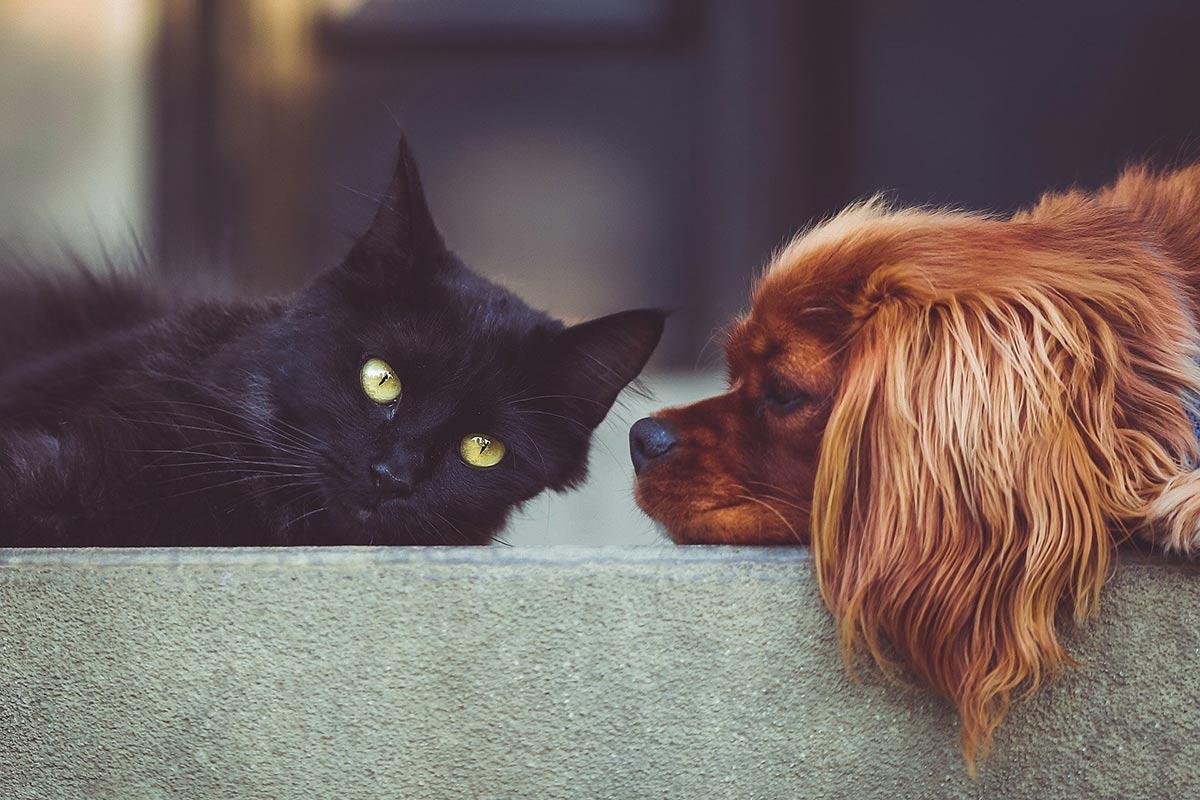 3 Tipps für den Kauf von Zubehör für Hunde und Katzen
