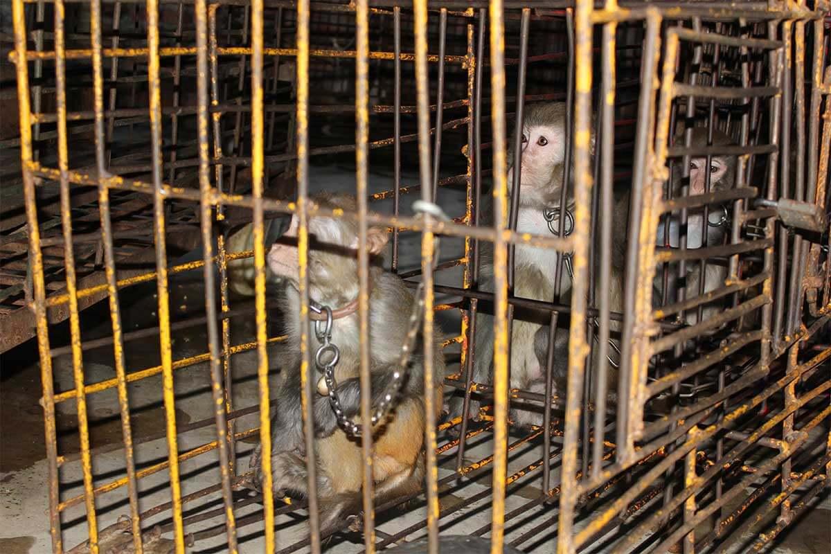 Affen im kleinen Kaefig eingesperrt