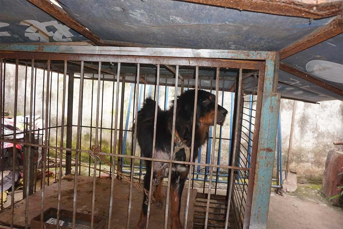Hund im kleinen Kaefig eingesperrt
