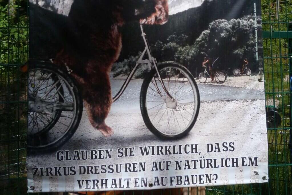 Poster mit Baer auf Fahrrad