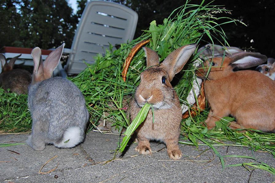 Kaninchen essen
