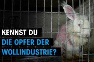 Thumbnail Hase Kennst du die Opfer der Wollindustrie