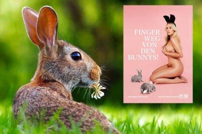 Collage Hase und PETA Motiv Katharina Kern