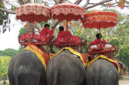 Menschen reiten auf Elefanten