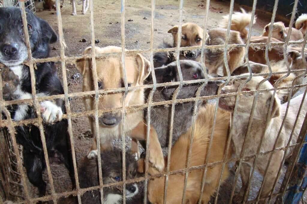 Hunde im Shelter Rumaenien