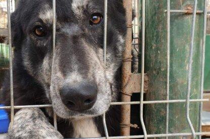 Hund streckt Pfote und Nase aus dem Zwinger
