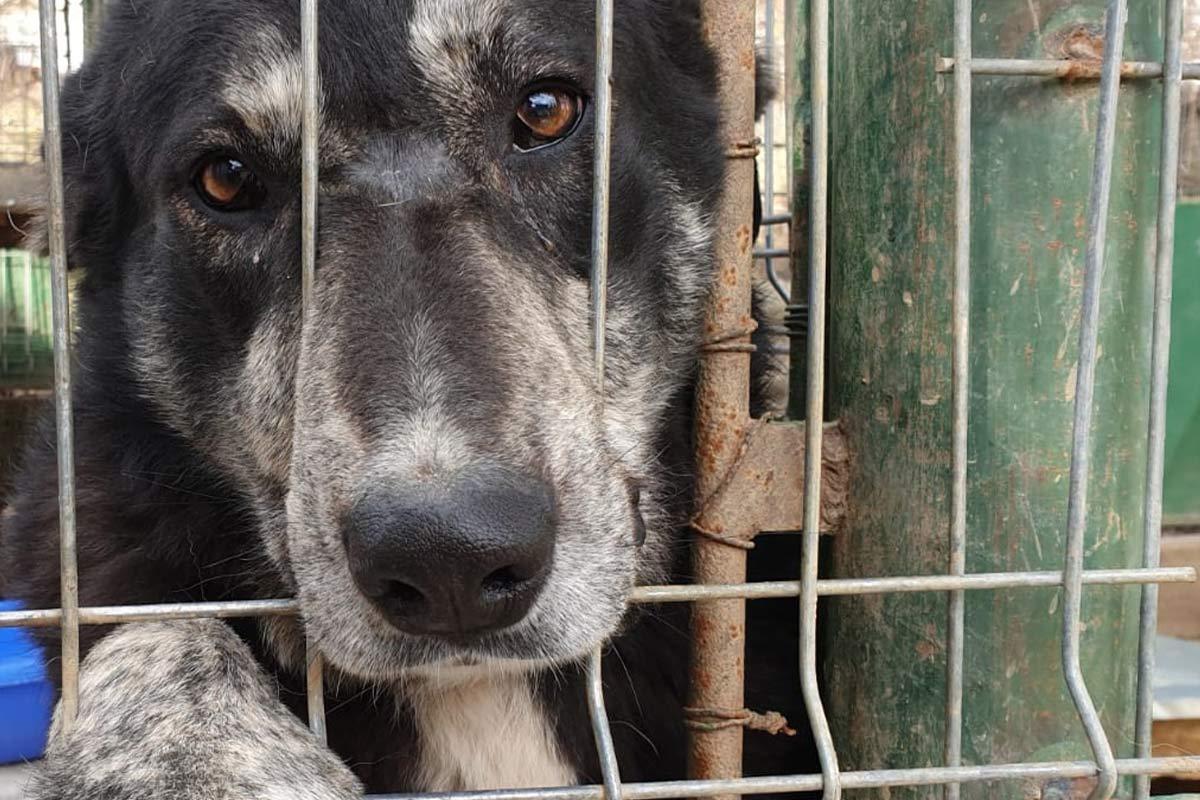 Hunde in Rumänien: Alles über die Not der Straßenhunde
