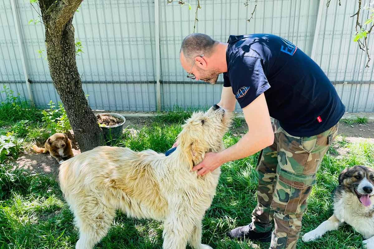 Mann verpflegt Hunde