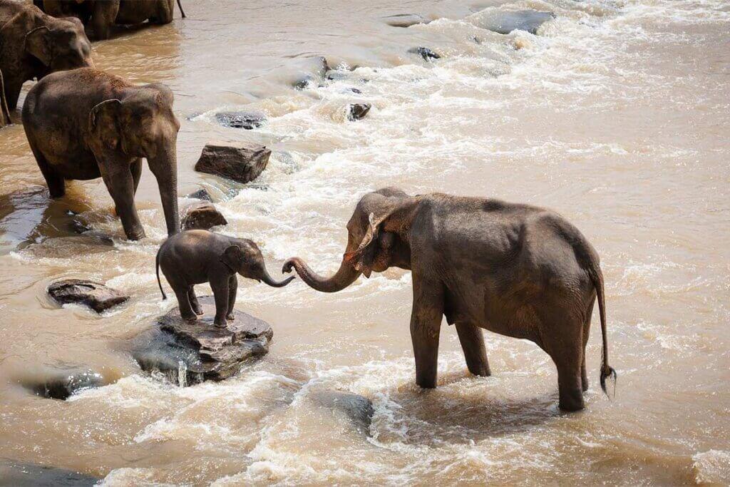 Elefanten stehen in einem Fluss