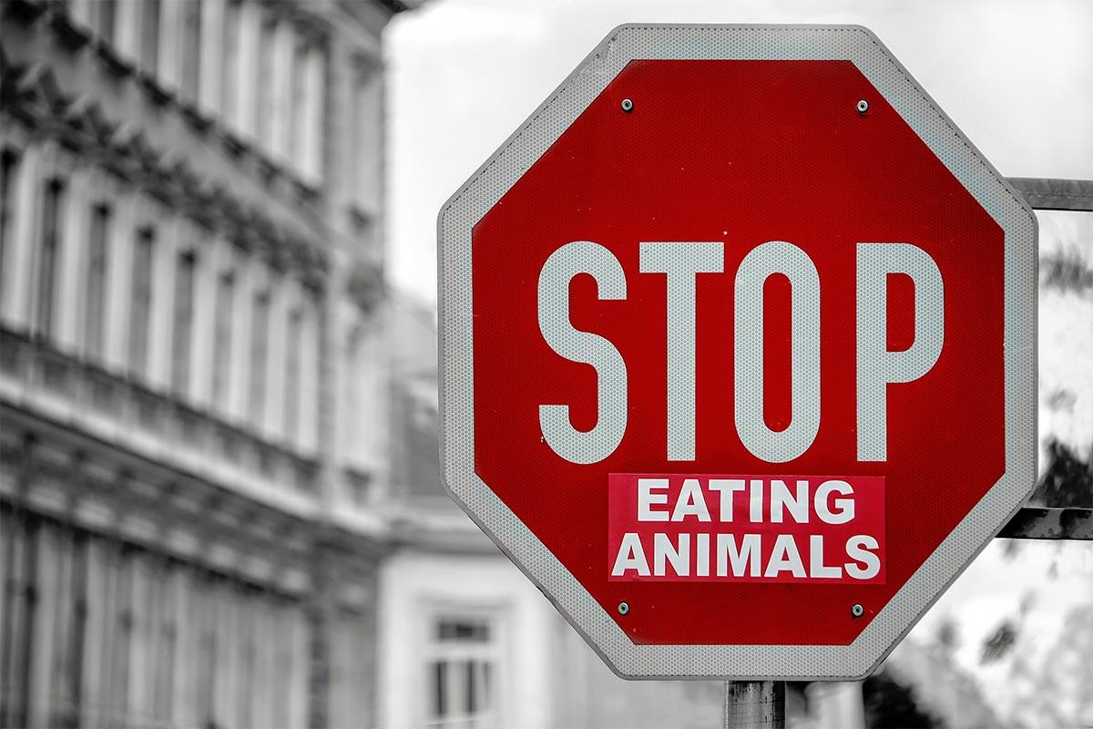 Die 7 besten Gründe, warum Sie kein Fleisch essen sollten