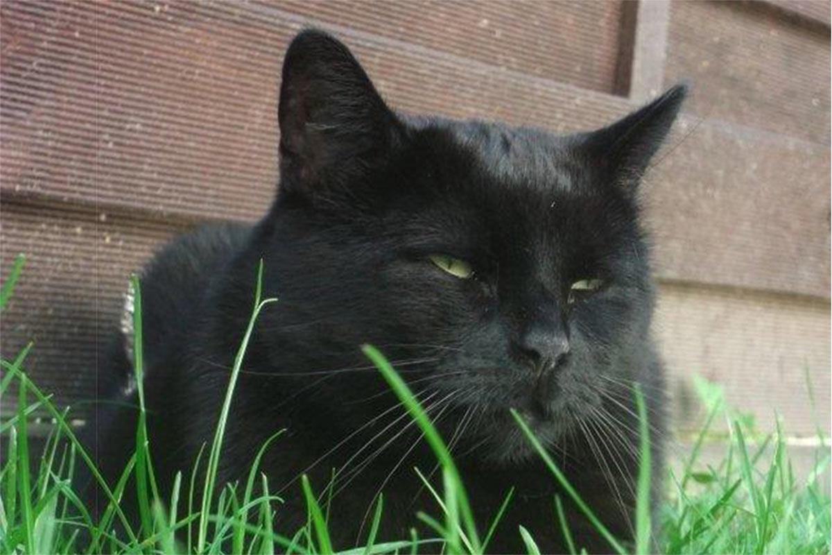 Luzie – diese Katze entkam einem Leben im Tierversuchslabor