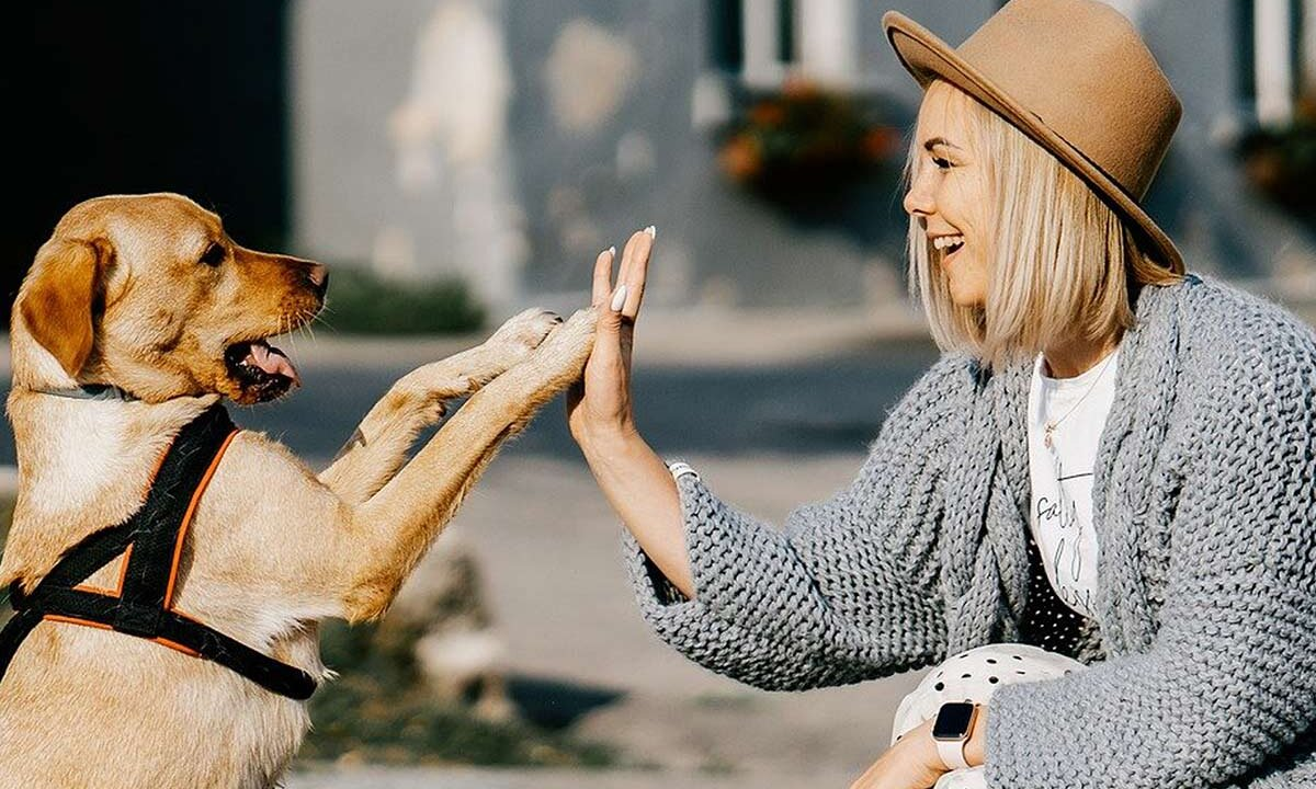Frau gibt Hund die Hand