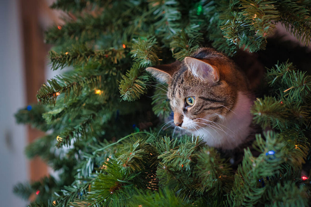 katze in einem weihnachtsbaum