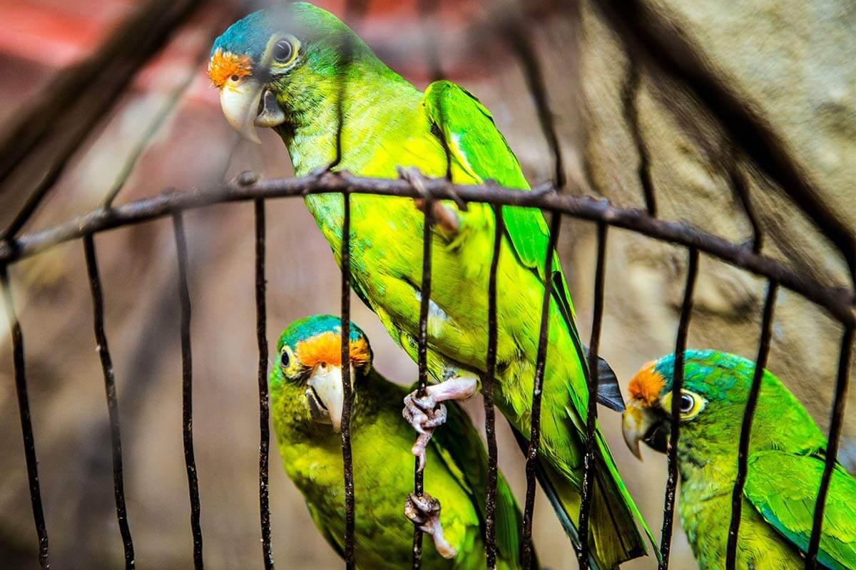 Vogelkäfige: Warum man Vögel nicht einsperren sollte