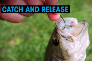 Fisch am Hacken. Catch and Release Video Thumbnail