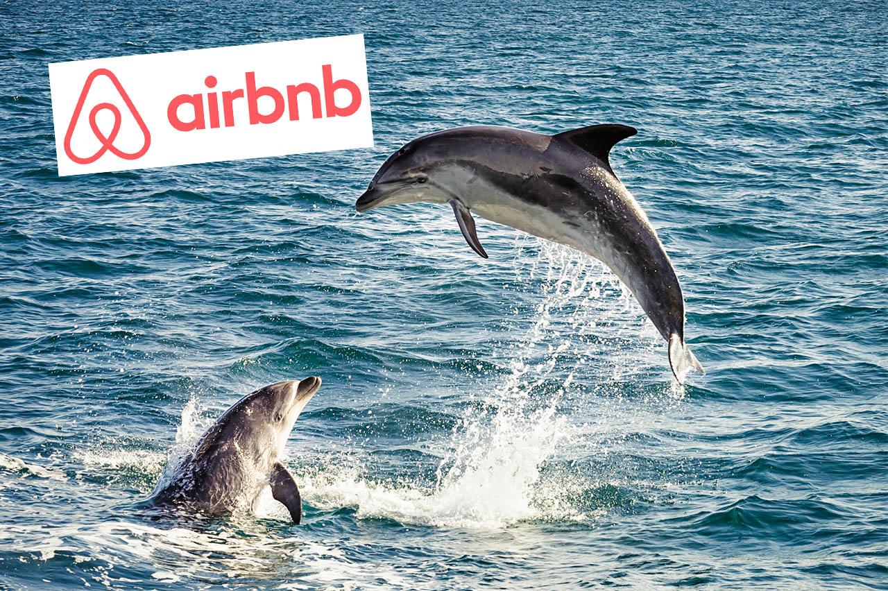 Keine Tickets zu Delfinarien mehr bei Airbnb!