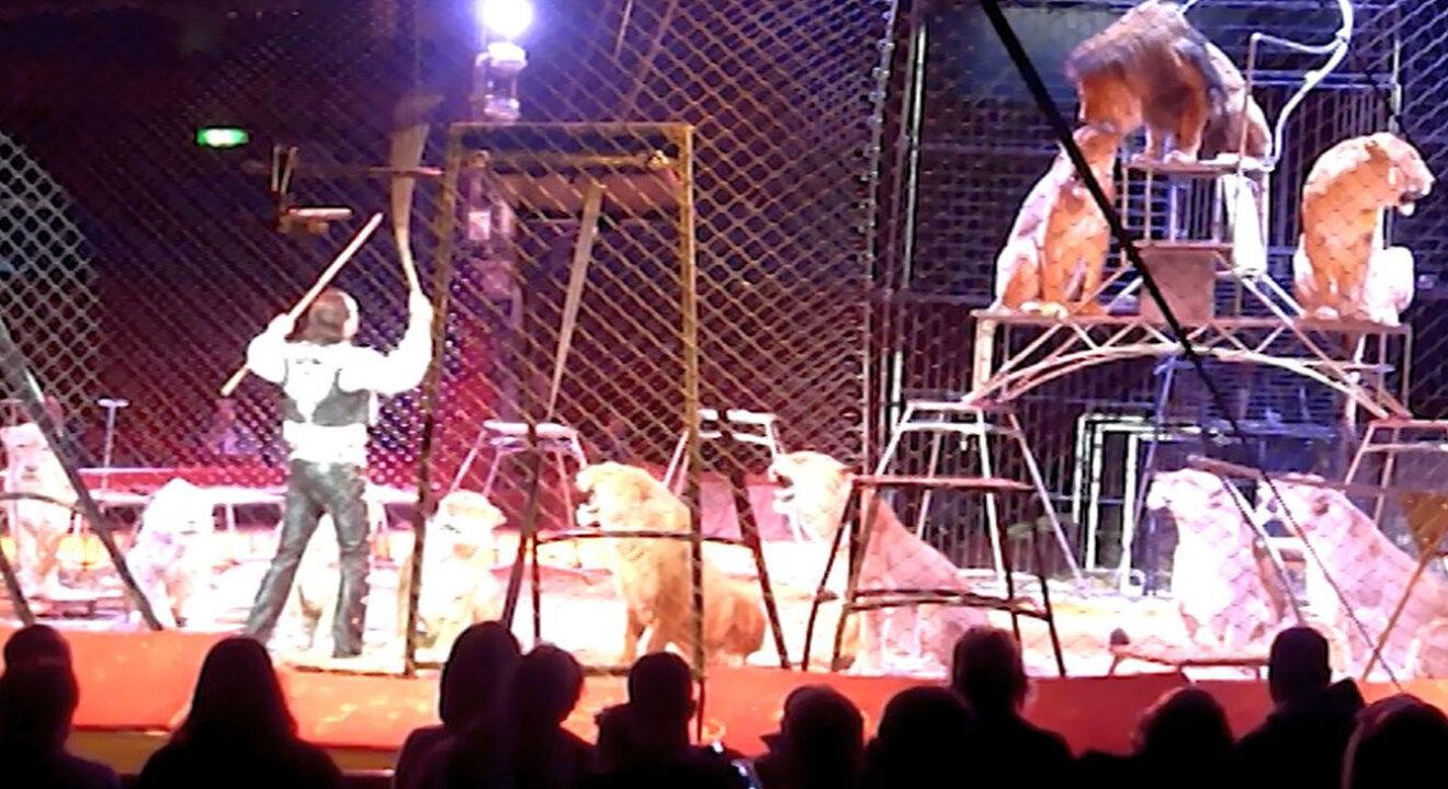 Dompeur im Zirkus vor Loewen