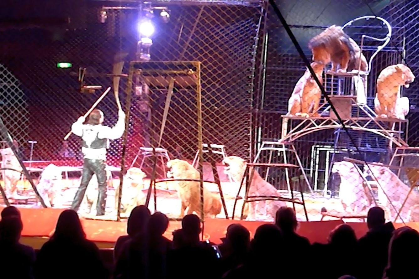 Circus Krone: Misshandelt dieser Dompteur Löwen und Tiger?