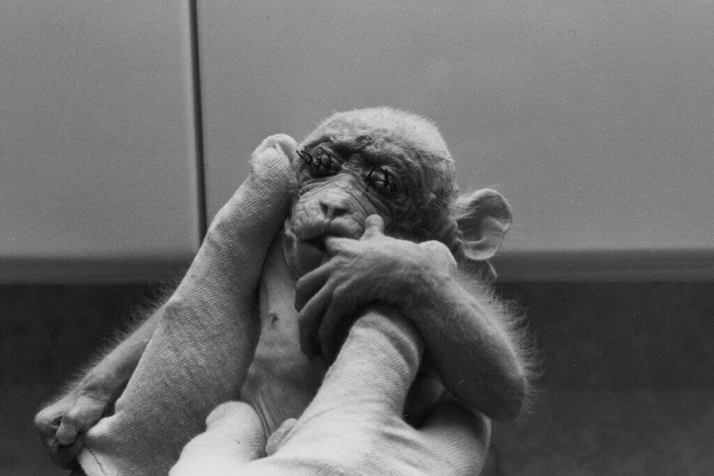 Affenbaby mit zugenaehten Augen