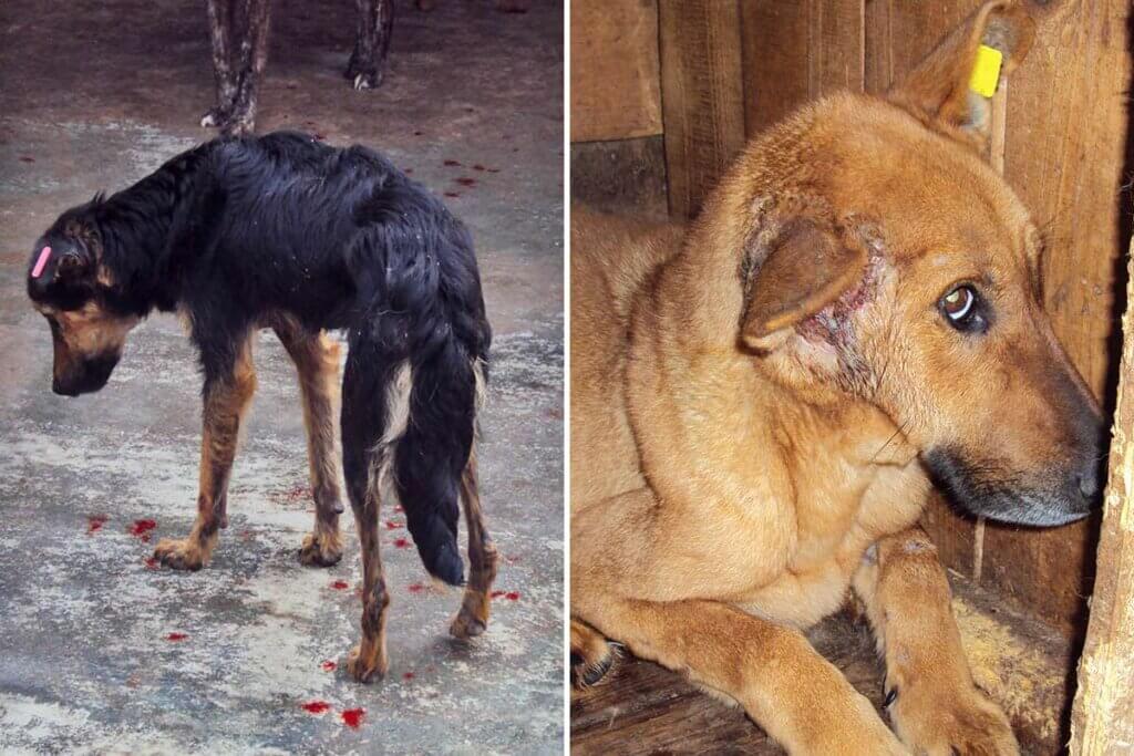 Hunde in rumaenischen Tierheimen