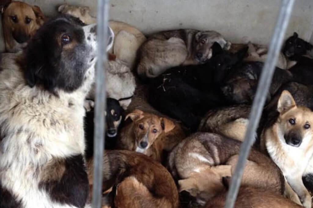 Strassenhunde im Zwinger