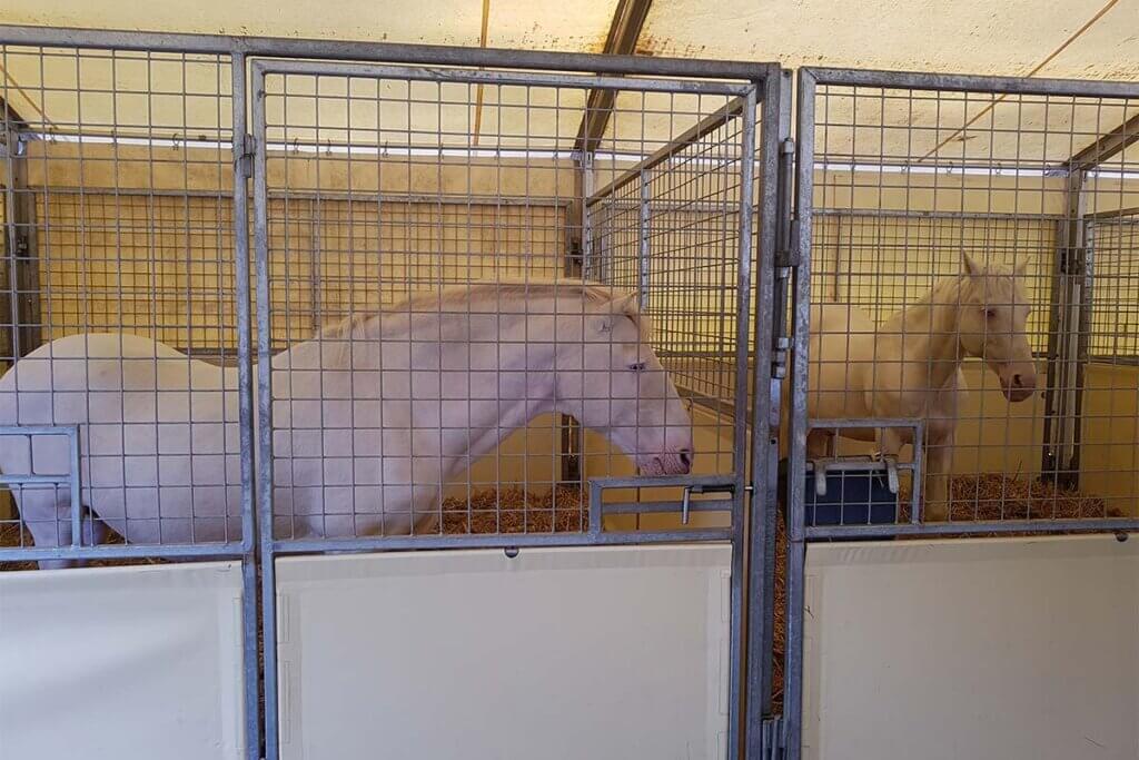 Pferde in kleinen Boxen vom Circus Krone
