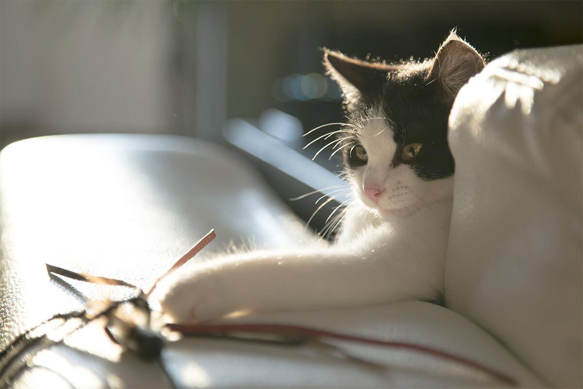 Katzenspielzeug selber machen – die 5 besten Ideen zum Basteln