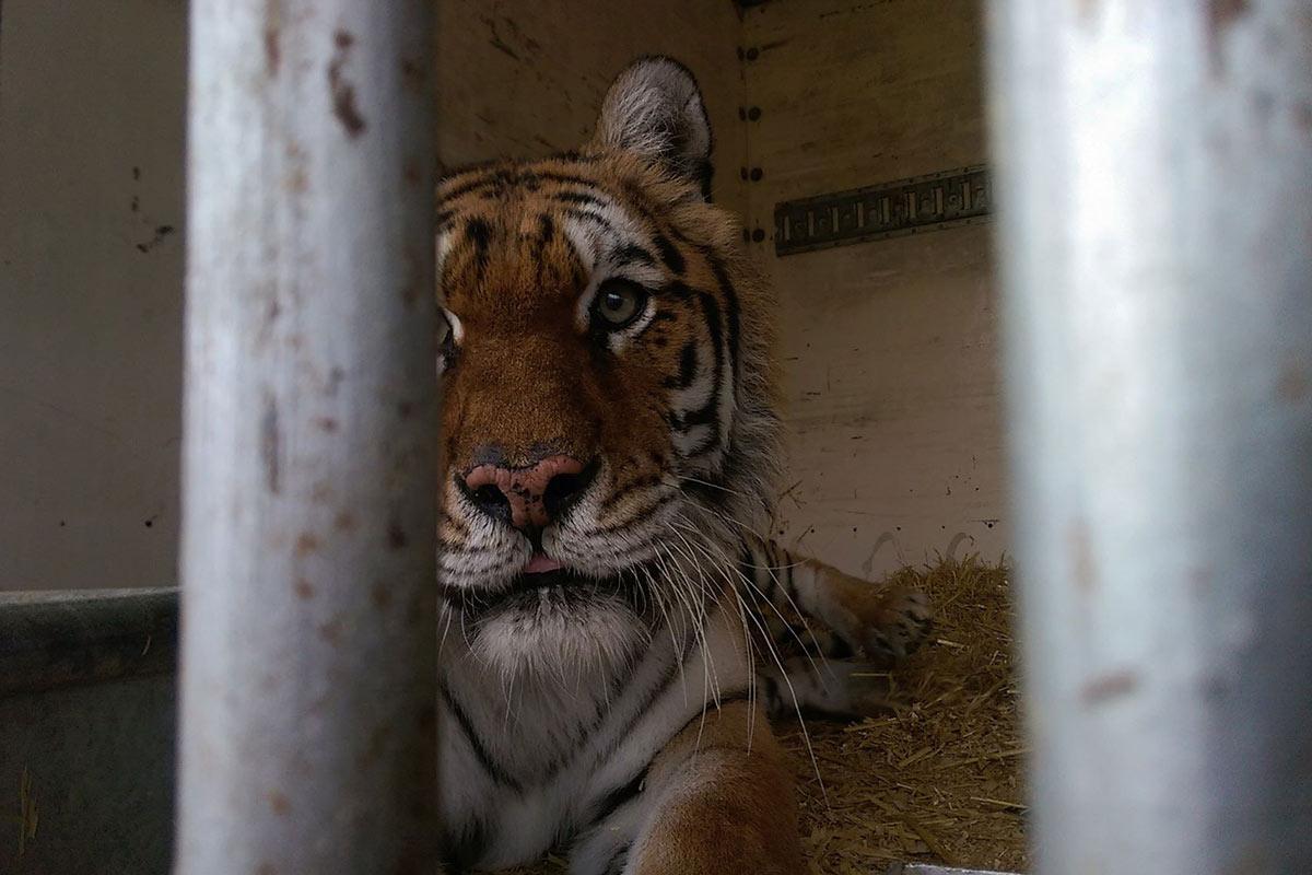 Moskauer Circus – Chronik der Tierschutzverstöße und weitere Vorfälle