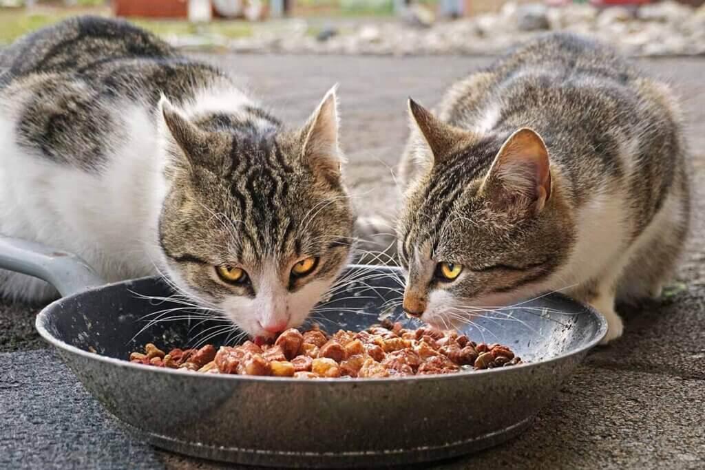 zwei katzen fressen