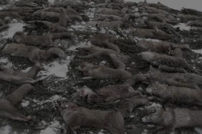 Fuchsstrecke toter Füchse