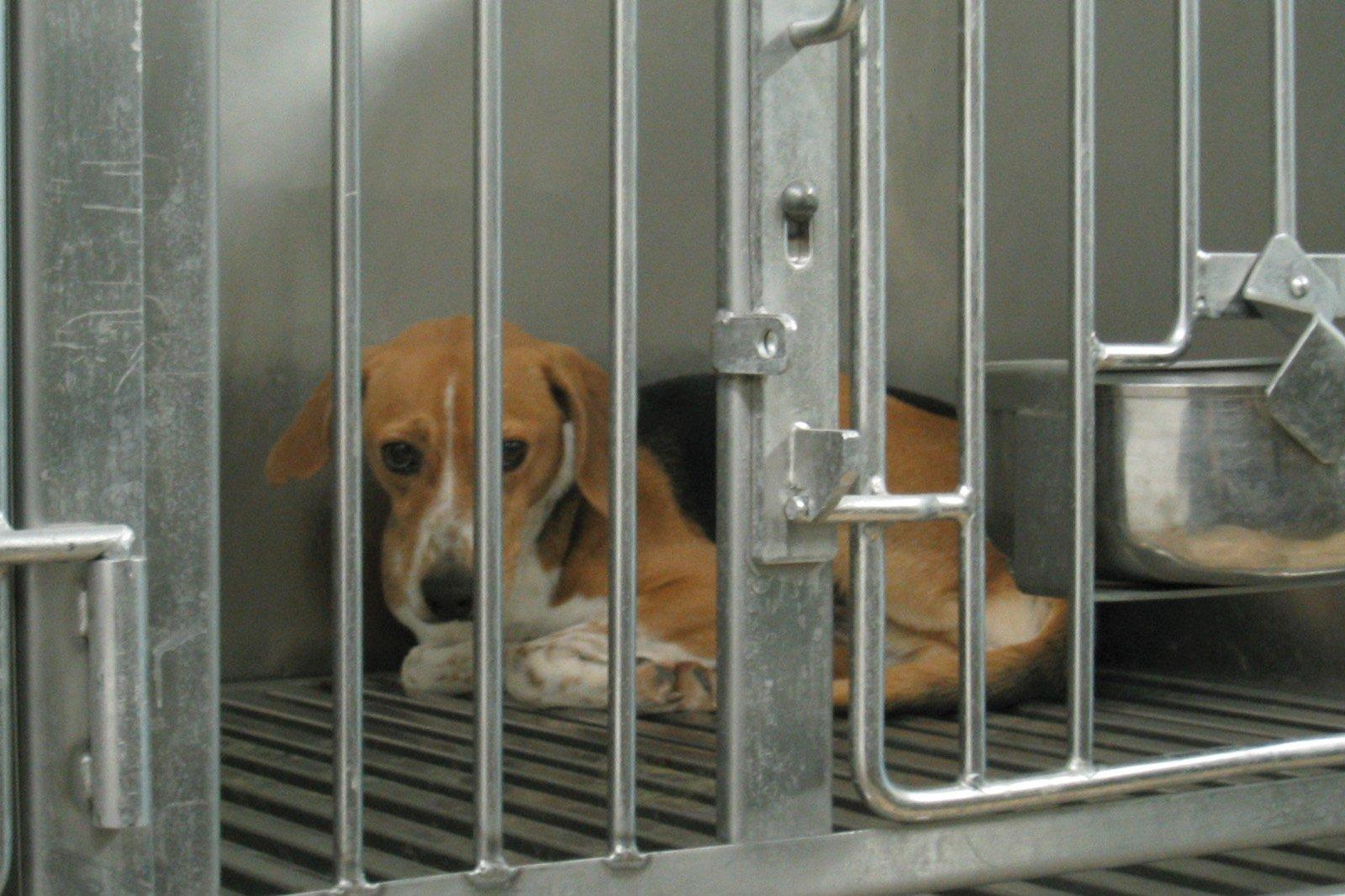 Tierversuche für Hunde- und Katzenfutter – alle Informationen
